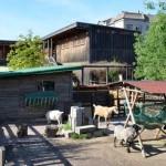 Bild Jugendfarm Moritzhof am Mauerpark - Außenansicht rückseitig, Freigehege