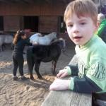 Bild: Junge klettet am Geländer des Pferdestalls
