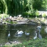 Bild: Reiher im Teich