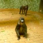 Bild: Affen im Affenhaus