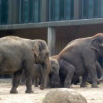 Bild: Elefantenherde im Gehege