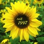 """Bild: Sonnenblume mit Text """"seit 1997"""" in der Mitte der Blume"""