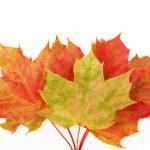 Bild: 4 Herbstblätter fächerartig angeordnet