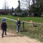 Bild: 2 Jungs stehen bei einem Zaun zur Ziegenwiese, einer schuat in die Kamera