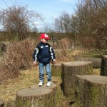 Bild: Junge steht auf einem von vielen großen abgesägten Baumstämmen