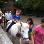 Bild Kind sitzt auf einem Pferd