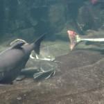 Bild: Unterwasserlandschaft mit mehreren Fischen