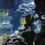 Bild: Unterwasserlandschaft mit einem Hai im Hintergrund