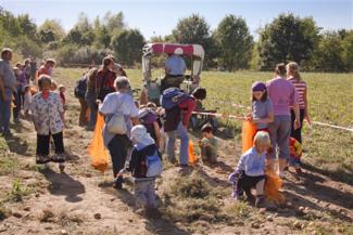 Foto: Eltern und Kinder sammeln übrige Kartoffeln von einem Acker. Traktor im Hintergrund.