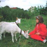 Foto: Mädchen in rotem Trainingsanzug kniend auf grüner Wiese vor 2 Ziegen und füttert eine mit Gras. Im Hintergrund grünes Gebüsch.