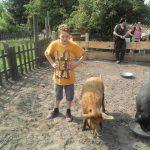 Foto: Junge steht links neben 2 behaarten Schweinen, wobei das rechte aus eine Schale frist. Kinder und ihre Eltern stehen im Hinterund am Zauen und schauen zu.