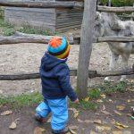Foto: 2 Kleinkinder mit dem Rücken zum Betrachter vor einem Tiergatter. Dahinter ein Esel.