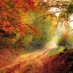Foto: Ein Waldweg, umsäumt von bunten Herbstbäumen, führt auf eine Wiese