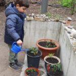 Foto: Rechts Blumentöpfe, links steht ein kleiner Junge der die Pflänzchen mit einer blauen Giesskanne giesst.